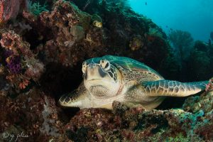 Green turtle image example